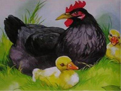 """""""Курица на столбах"""" М. Пришвина: краткое содержание и идея рассказа"""