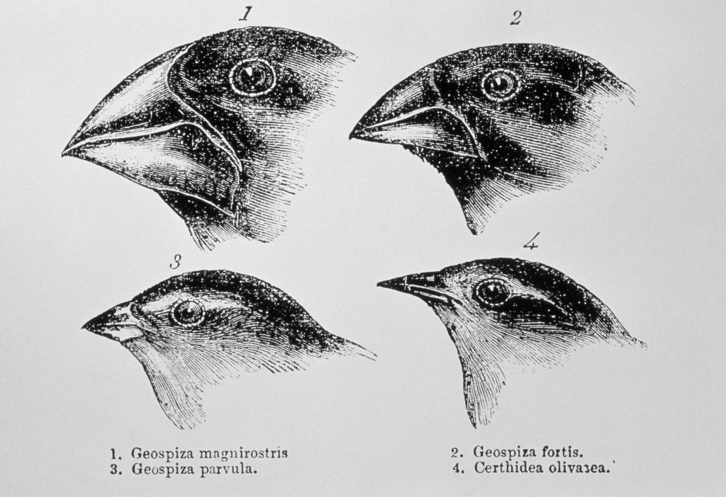 эволюция птичьего клюва